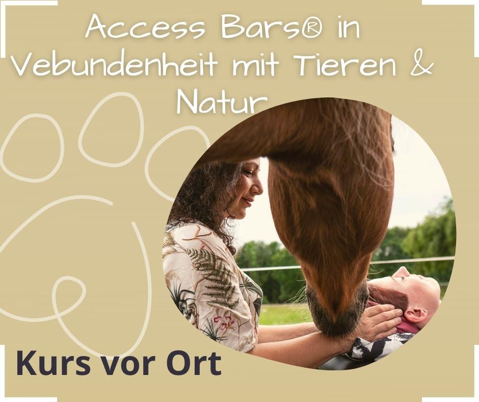 Access Bars Kurs bei Pferden