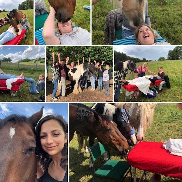 Access Bars lernen Pferde
