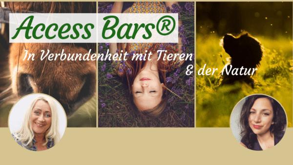 Access Bars Tiere Tiermenschen Access Bars lernen Köln