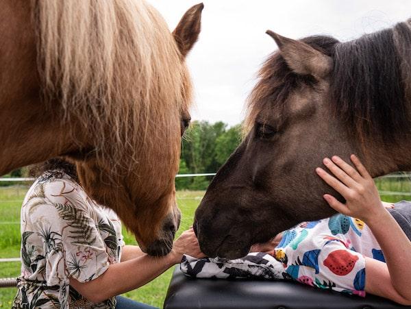 Access Bars Kurs pferde Tierkommunikation lernen