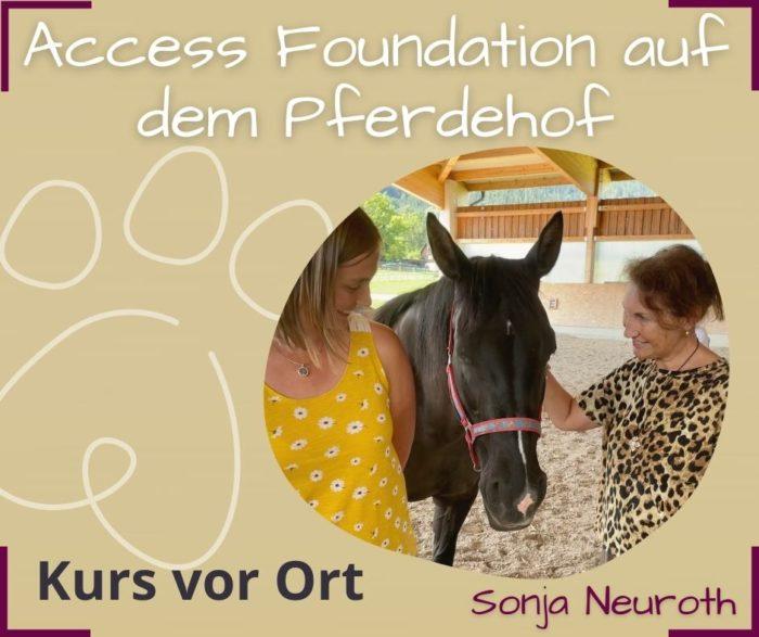 Access Foundation Kurs Pferde