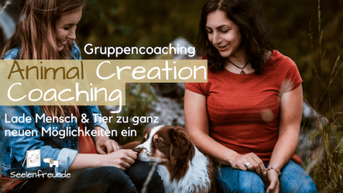animal Creation Coaching Tierkommunikation Coaching