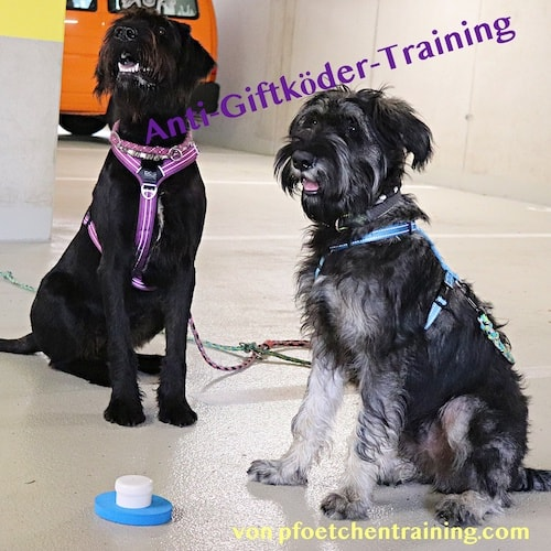 Anti Giftköder Training Hund Hundetraining Tierakademie