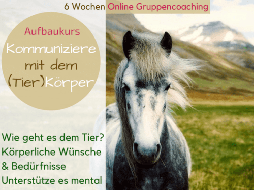 Tierkommunikation Aufbaukurs online Tierkörper