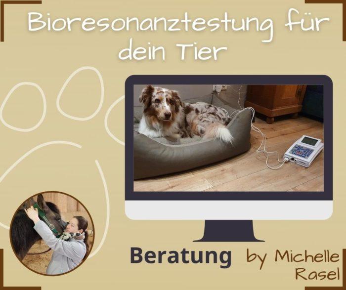 Bioresonanztestung Tiere