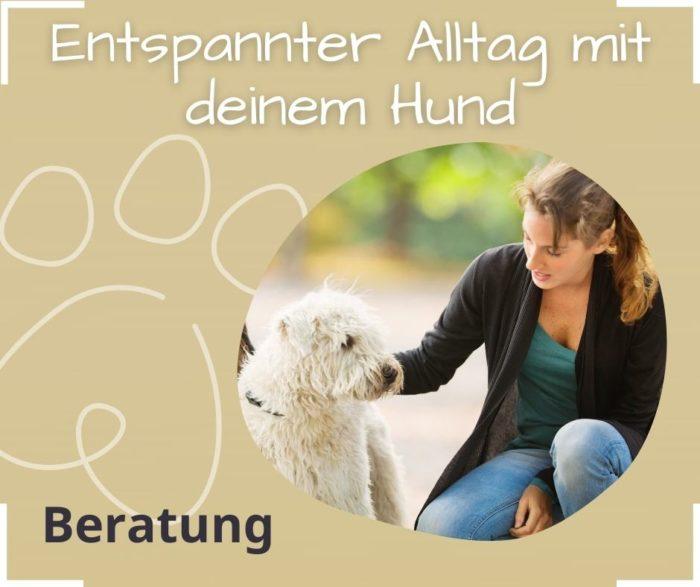 Entspannter Hund Alltag Tierkommunikation