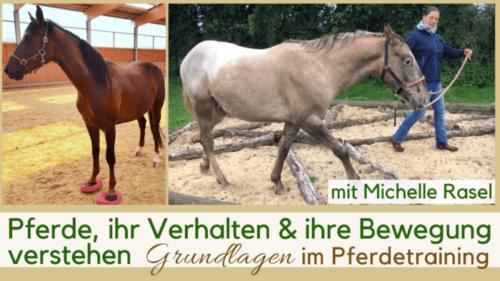 Pferdetraining Bodenarbeit Pferde verstehen Körpersprache