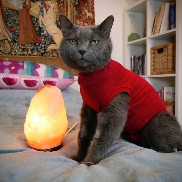 Sterbebeleitung für dein Tier Katze