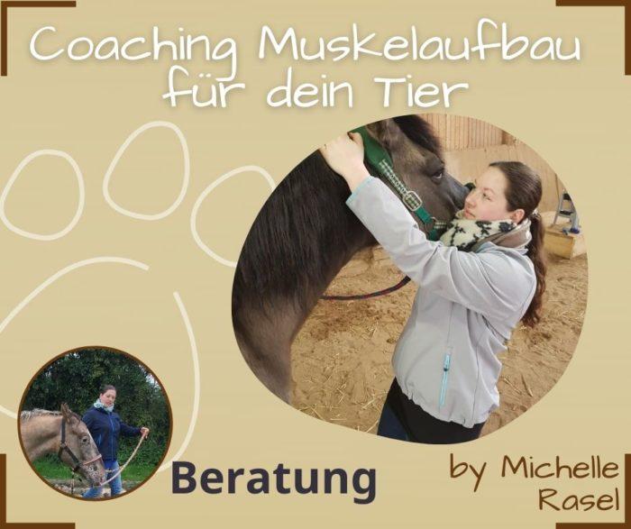 Muskelaufbau Hund Michelle Rasel Seelenfreunde Tierakademie
