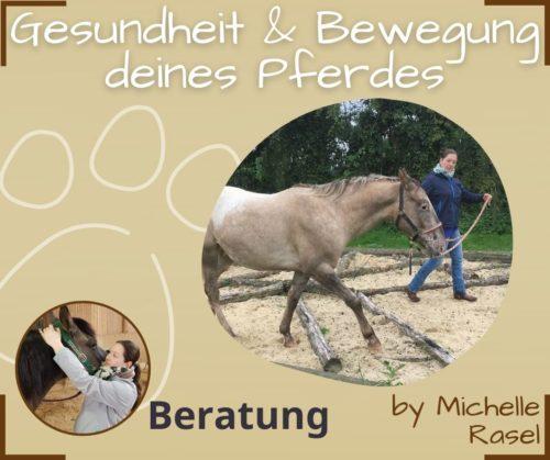 Pferdegesundheit Bewegung