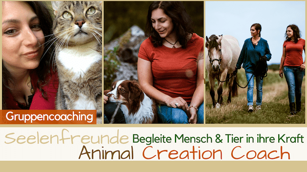 Seelenfreunde Animal Creation Coach Tierkommunikation Ausbildung