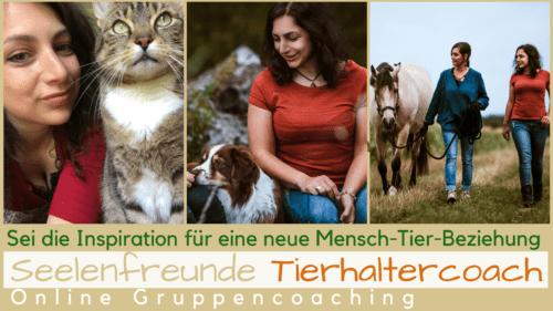 Seelenfreunde Tierhaltercoach Tierhaltercoaching Hund Katze Pferd Ausbildung