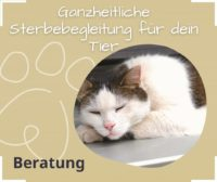 Sterbebegleitung für Tiere Katze stirbt was tun