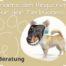 Tierbusiness Sichtbarkeit Positionierung