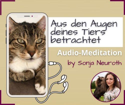 Tierkommunikation lernen Meditation Tier verstehen