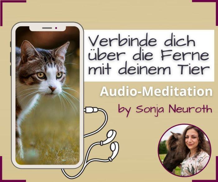 Meditation Tierkommunikation sprich mit deinem Tier über die Ferne