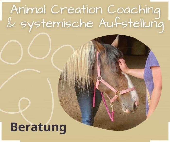 Tierkommunikation Systemische Aufstellung Animal Creation Coaching