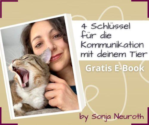Tierkommunikation kostenlos lernen