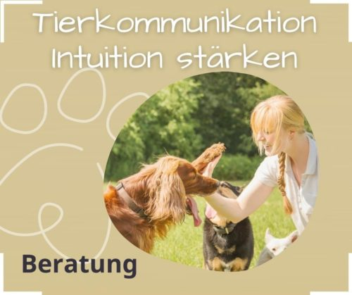 Vertrauen mit deinem Tier Kommunikation