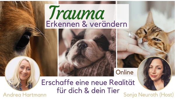 Traumatisierte Tiere Trauma verändern online