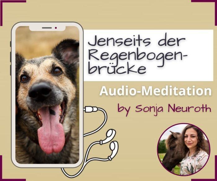 Verstorbenes Tier Tierkommunikation loslassen Meditation