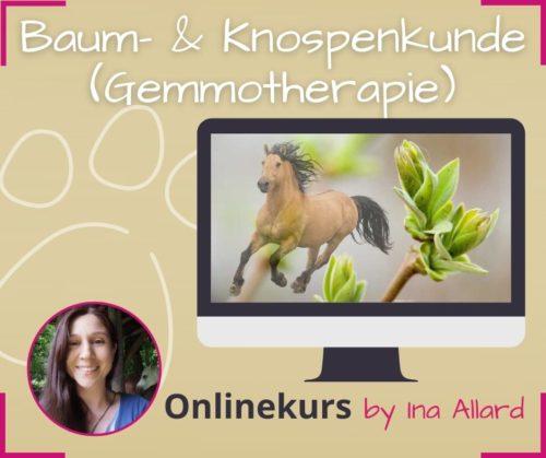 baum und knospenkunde entgiften gemmotherapie online kurs ina allard