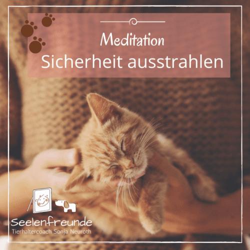 Meditation Tierkommunikation Sicherheit Katze Hund Pferd