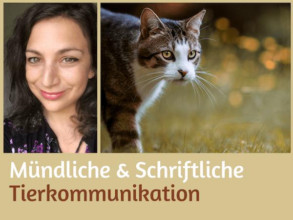 Tierkommunikation mündlich schriftlich Tiere verstehen online