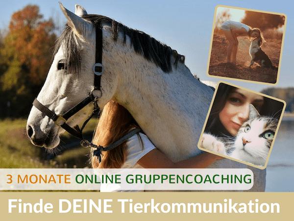 Tierkommunikation lernen online Einsteiger