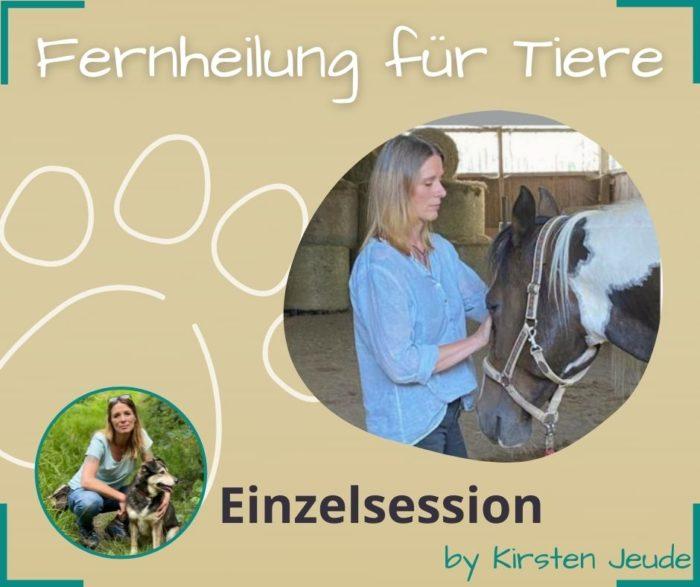 Fernheilung für Tiere Kirsten Jeude Seelenfreunde Tierakademie