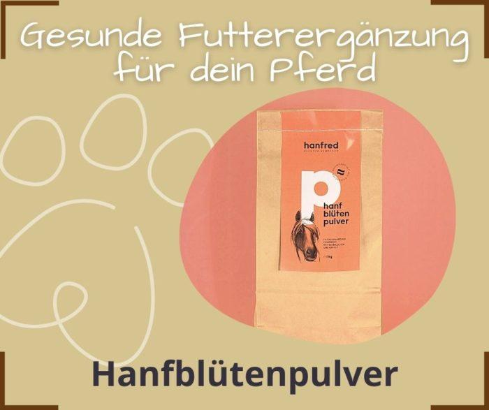 Gesunde Ffutterergaenzung Hund Hanfbluetenpulver Michelle Rasel Seelenfreunde Tierakademie