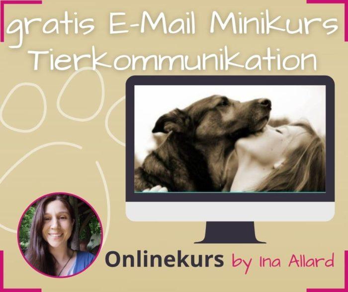 gratis email kurs tierkommunikation lernen minikurs online ina allard