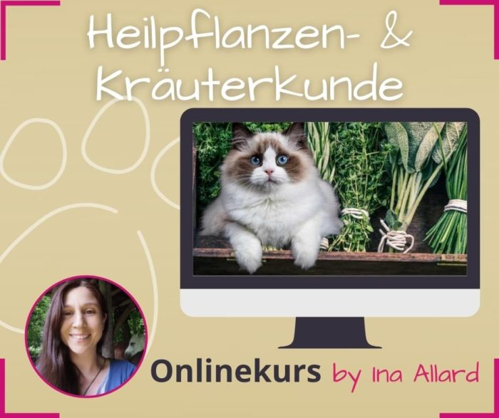 heilpflanzen und kraeuterkunde fuer tiere lernen online kurs ina allard