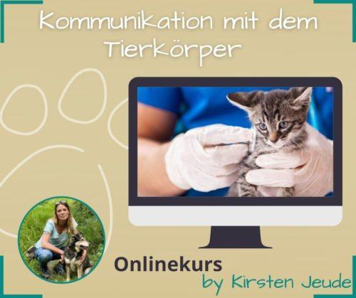 Kirsten Jeude Kommunikation mit dem Tierkörper