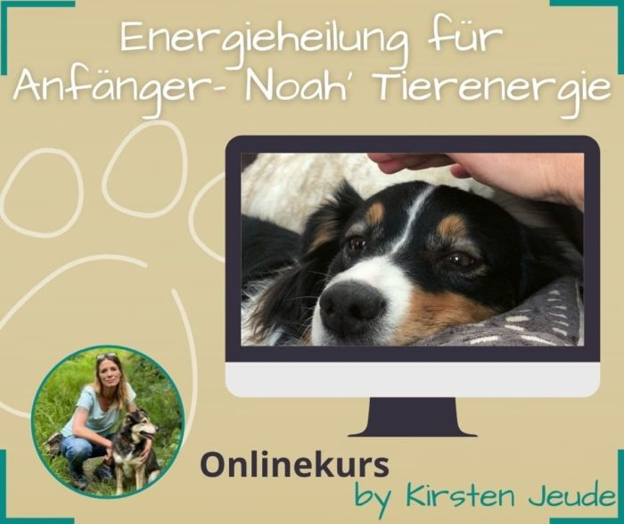 Seelenfreunde Tierakademie Tierkommunikation Energieheilung für Anfänger Kirsten Jeude