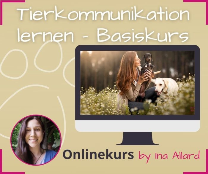 tierkommunikation online lernen kurs basiskurs ina allard fuer anfaenger