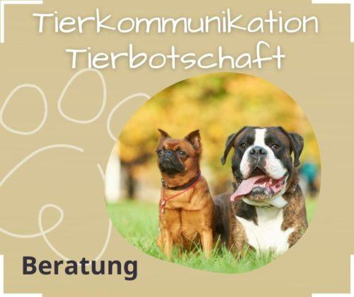 tierkommunikation tierbotschaft akasha session animal creation coaching muendlich schriftlich